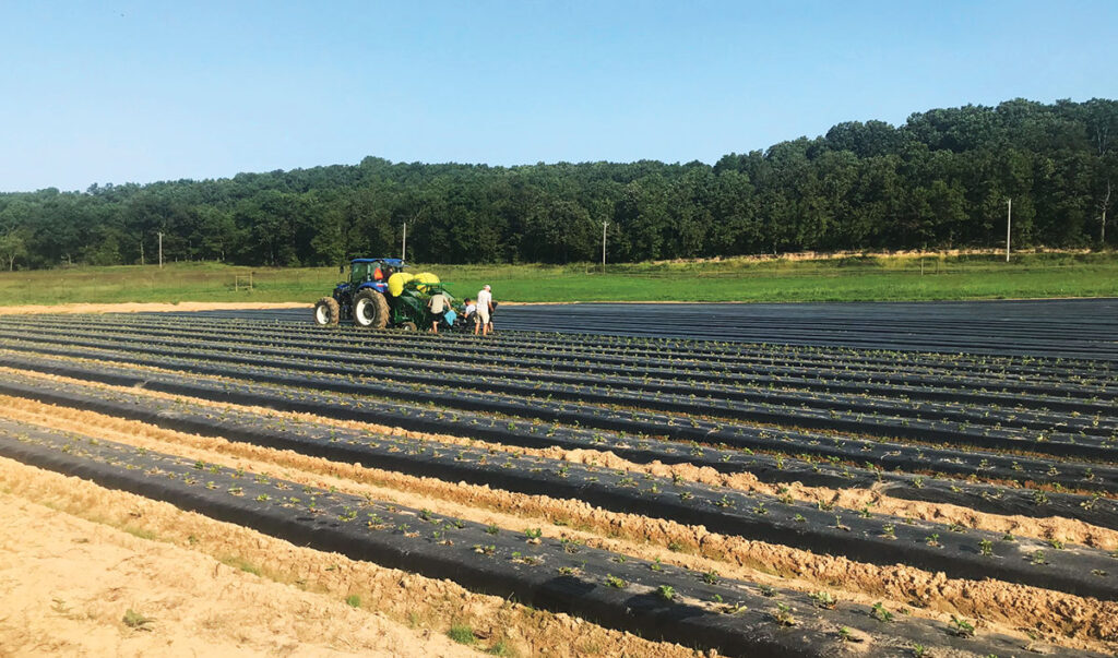 West family planting strawberries at their farm (Whitewater Hollow Farms) in Grove, Oklahoma. Submitted Photo.
