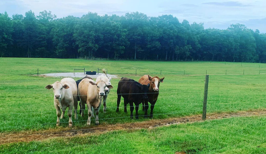 Tyler and Laura Beaudreay worked to improve their land before getting cattle. Submitted Photo.